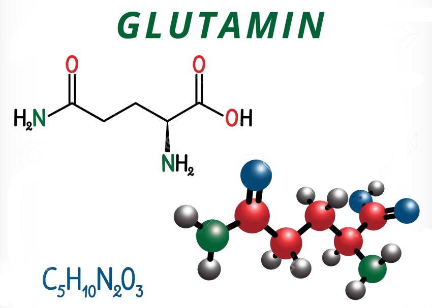 Glutamin a legfontosabb aminosav
