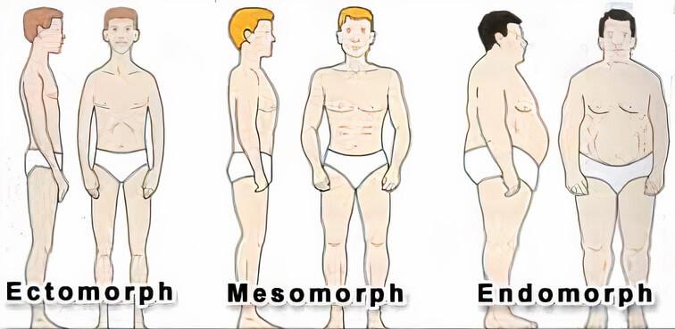 fogyás endomorf